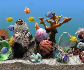 Quais peixes colocar no aquário marinho